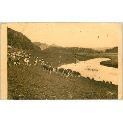 carte postale ancienne 25 PONTARLIER. Troupeau de Vache aux Pâturages (défauts)...