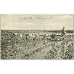carte postale ancienne 33 ARCACHON. La Récolte des Huîtres