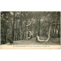 carte postale ancienne 33 SOULAC-SUR-MER. Pins tordus en Forêt