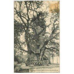 carte postale ancienne 76 ALLOUVILLE-BELLEFOSSE. Gros Chêne. Timbre absent