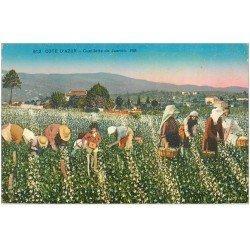 carte postale ancienne 06 Côte d'Azur. Cueillette du Jasmin 1928