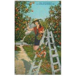 carte postale ancienne 06 Côte d'Azur. La Cueillette des Oranges 1928
