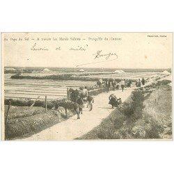 carte postale ancienne 44 LE CROISIC. Marais Salant 1902. Presqu'Île avec mules et ânes. Les Mulons