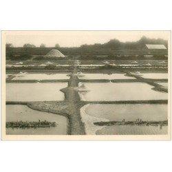 carte postale ancienne 44 LE POULIGUEN. Marais Salants. Mulons et Sel. Carte Photo 207