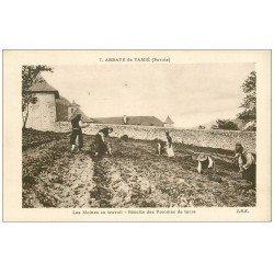 carte postale ancienne 73 ABBAYE DE TAMIE. Récolte Pommes de terre par les Moines