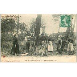 carte postale ancienne 40 LANDES. Dernière Récolte de la Résine 1909. Vieux métiers Campagne