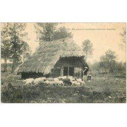 carte postale ancienne 40 LANDES. Un Parc à Moutons 1906. Vieux métiers Campagne