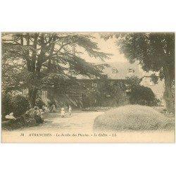 carte postale ancienne 50 AVRANCHES. Le Cèdre au Jardin des Plantes