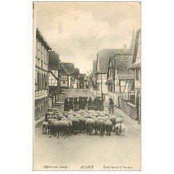 carte postale ancienne 68 ALSACE. Départ aux Champs troupeau de Motons. Métiers de la Campagne