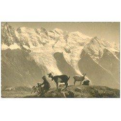 carte postale ancienne 74 CHAMONIX. Chèvres, Jeune Berger et Chien. Le Carillon. Carte photo dentelée à la ficelle