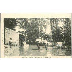 carte postale ancienne 86 AYRON. Abreuvoir de la Vendelogne Chevaux Vaches et Boeufs