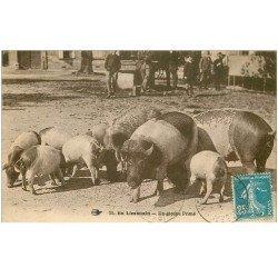 carte postale ancienne 87 LE LIMOUSIN. Un groupe de Porcs et Cochons primés à la Foire