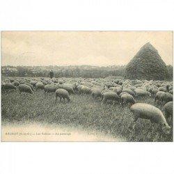 carte postale ancienne K. 91 BRUNOY. Les Vallées. Berger et troupeau de Moutons au pâturage vers 1909