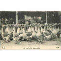 carte postale ancienne 15 AURILLAC. Le Marché aux Oies. Une Famille en Villégiature