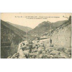 carte postale ancienne 66 LE ROUSSILLON. Berger ramenant son troupeau de Moutons et cassant la croüte