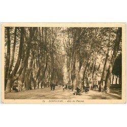 carte postale ancienne 66 PERPIGNAN. Allées des Platanes 1933