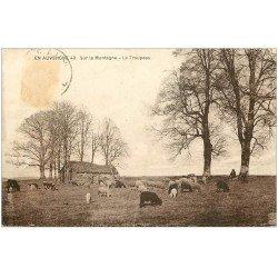 carte postale ancienne 63 AUVERGNE. Troupeau de Moutons