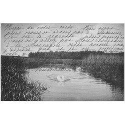 carte postale ancienne 34 BEZIERS. Cygnes sur un Etang 1904. Carte vert amande