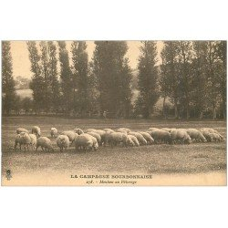 carte postale ancienne 03 BOURBONNAIS. Moutons au Pâturage