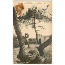 carte postale ancienne 17 LA GRANDE COTE. Les Pins tordus 1923
