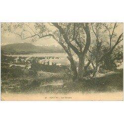 carte postale ancienne 20 AJACCIO. Les Oliviers 1911