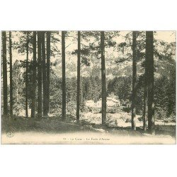 carte postale ancienne 20 CORSE. La Forêt d'Aitone. Antone. Anttone ou Artone