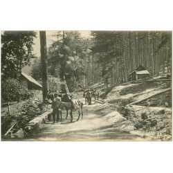carte postale ancienne 20 CORSE. Piana. La Forêt d'Aïtenne. Carte Photo. Muletiers avec Anes et Mules
