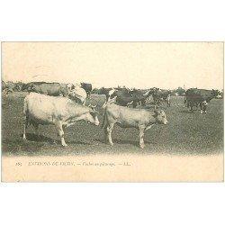 carte postale ancienne 03 Troupeau de Vaches au Pâturage 1905