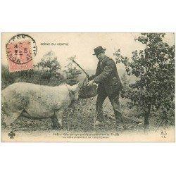 carte postale ancienne 03 Un Cochon chercheur de Truffes 1909