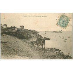 carte postale ancienne 35 CANCALE. Vache sur Falaise