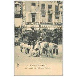 carte postale ancienne 65 CAUTERETS. Magnifiques Chiens des Pyrénées et Photographie Messy