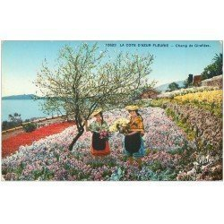carte postale ancienne 06 Côte d'Azur. Champ de Giroflées