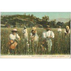carte postale ancienne 06 Côte d'Azur. Cueillette des Tubéreuses 1911
