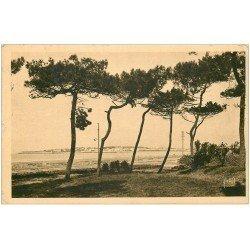carte postale ancienne 44 LA BAULE. Les Pins 1932