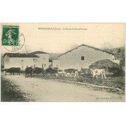 carte postale ancienne 38 BONNEFAMILLE. Vaches Ferme de Grand'Grange 1911