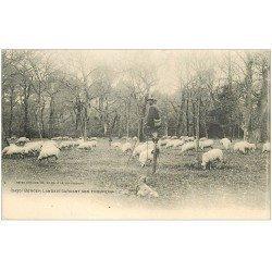 carte postale ancienne 40 LANDES. Berger Landais sur échasses gardant son troupeau de Moutons 1908. Vieux métiers Campagne