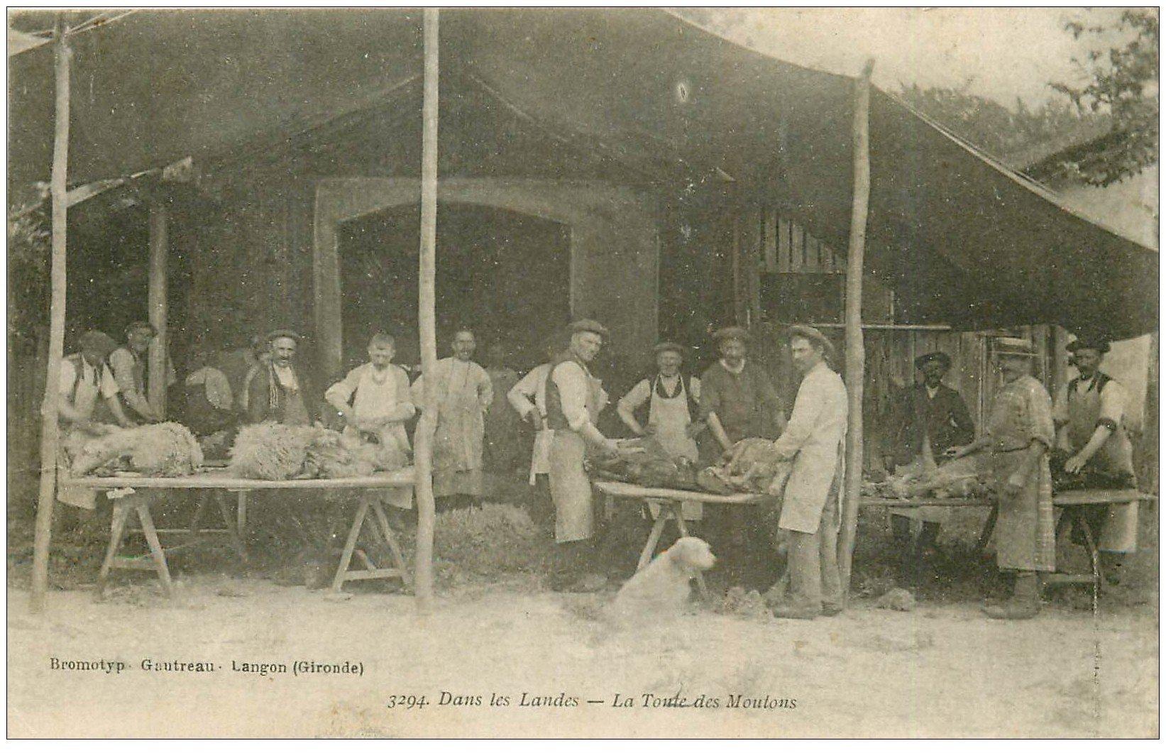 carte postale ancienne 40 LANDES. La Tonte des Moutons 1915. Vieux métiers Campagne
