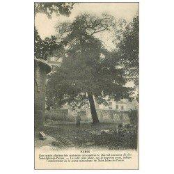 carte postale ancienne PARIS 05. Acacia Clos Saint-Julien-le-Pauvre