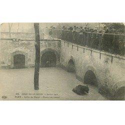 carte postale ancienne INONDATION ET CRUE PARIS 1910. L'Ours Martin au Jardin des Plantes