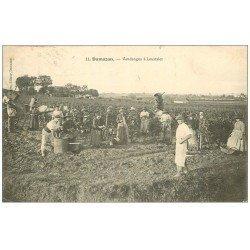 carte postale ancienne 47 DAMAZAN. Vendanges à Loustalet 1908. Vins, Vignes et Vignobles