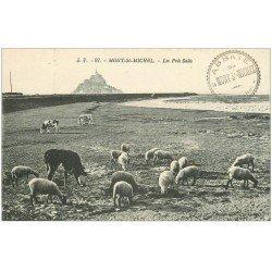 carte postale ancienne 50 LE MONT SAINT-MICHEL. Prés Salés des Grèves. Vaches et Moutons 97