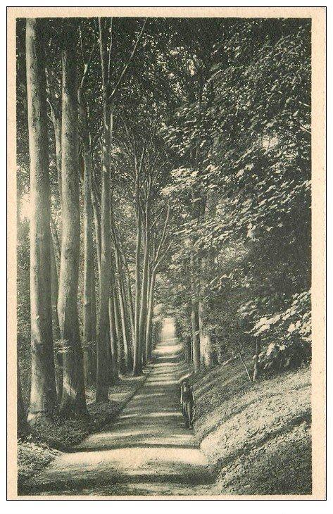 carte postale ancienne 60 CHATEAU DE REILLY. Allée des Platanes
