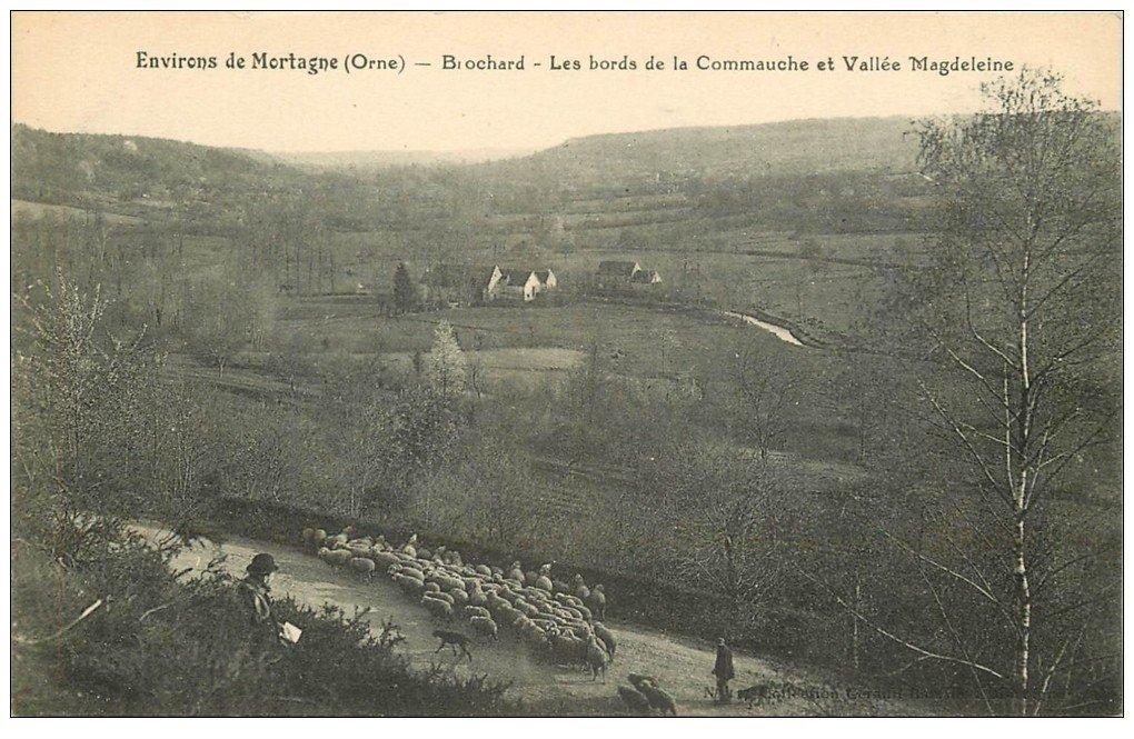 carte postale ancienne 61 BROCHARD. Commauche et Vallée Magdeleine. Troupeau Moutons