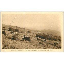 68 WESSERLING. Troupeau Vaches au Hus Col du Herrenberg. Tampon Périneau 152° Régiment Infanterie à Colmar