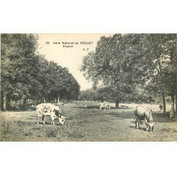 carte postale ancienne 78 LE VESINET. Prairie avec Vaches