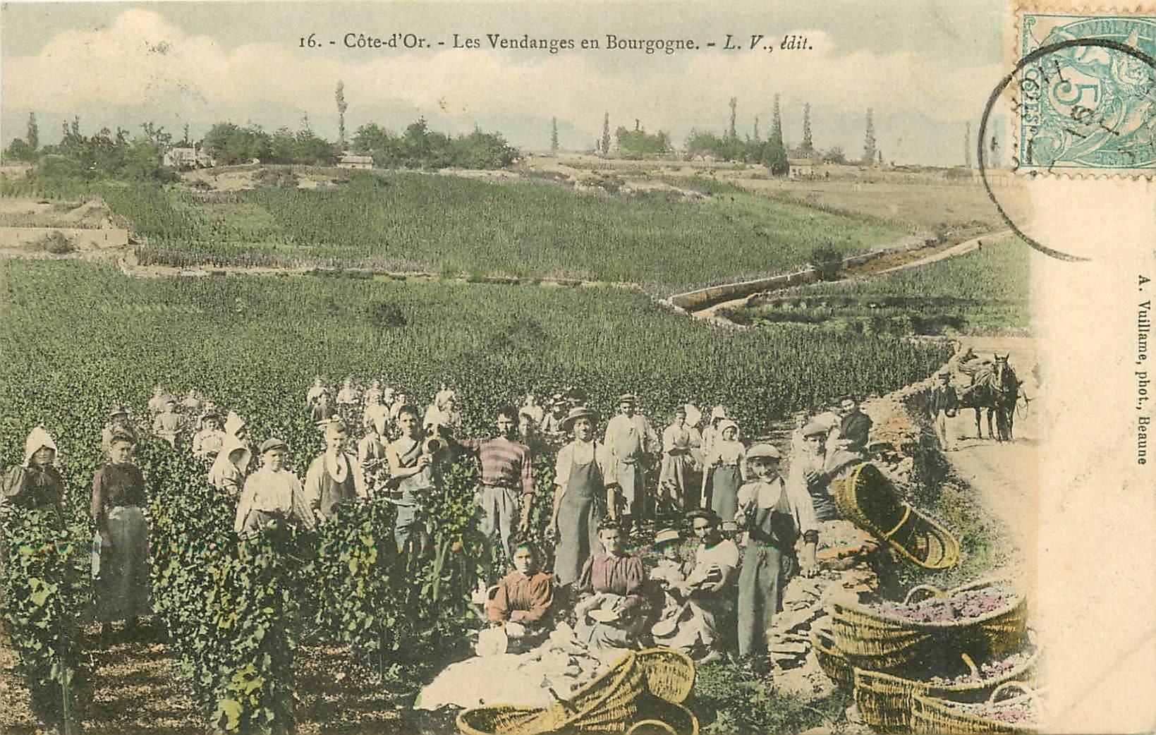 21 COTE D'OR. Les Vendanges en Bourgogne 1905. Vin Vignes Vignobles et Crus