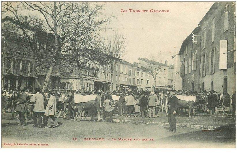 carte postale ancienne 82 CAUSSADE. Le Marché aux Boeufs 1908