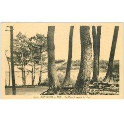carte postale ancienne 83 CAVALAIRE-SUR-MER. Plage à travers les Pins