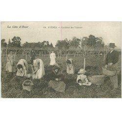 carte postale ancienne 83 HYERES. La Cueillette des Violettes à la main . Vieux métiers impeccable et vierge