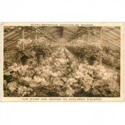 carte postale ancienne 90 BELFORT. Etablissements Horticoles Becker serre de Cyclamen d'Alsace